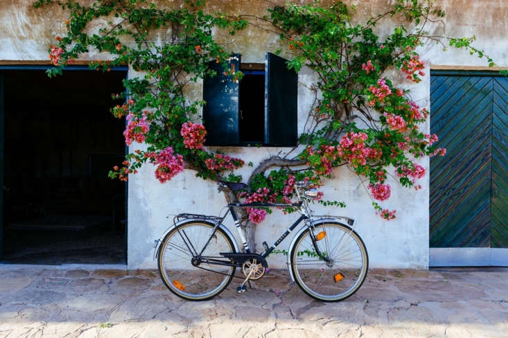 A bicycle against a flowering wall in a Menoca, Spain vacation house remodeled by Quintana Partners.