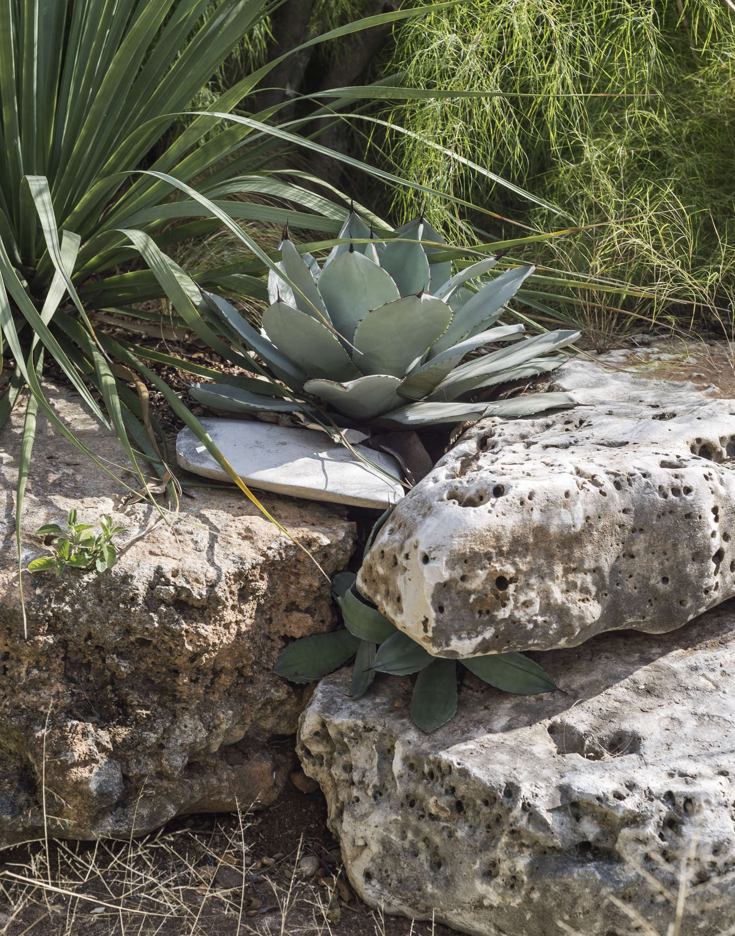 In her Austin, Texas garden, landscape architect Christine Ten Eyck has a thin crust of soil over limestone. To direct rainwater down a slope, she built a series of check dams and low retaining walls. Photograph by Matthew Williams for Gardenista.