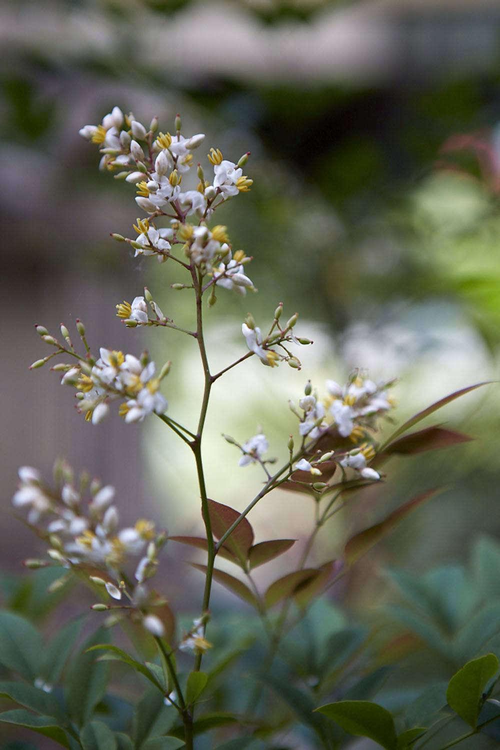 在泰国的热带雨林里,将会变成红莓病,然后将在明年的
