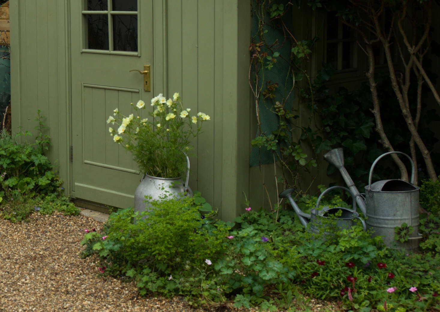 """""""I advise all my clients to dig up their small city lawns and replace them with gravel,"""" says Carolyn. """"It is cheap, attractive, better for the environment than paving slabs as it allows the rain water to sink through, and best of all it means you get loads of flowering plants for free if you allow them to self-seed."""""""