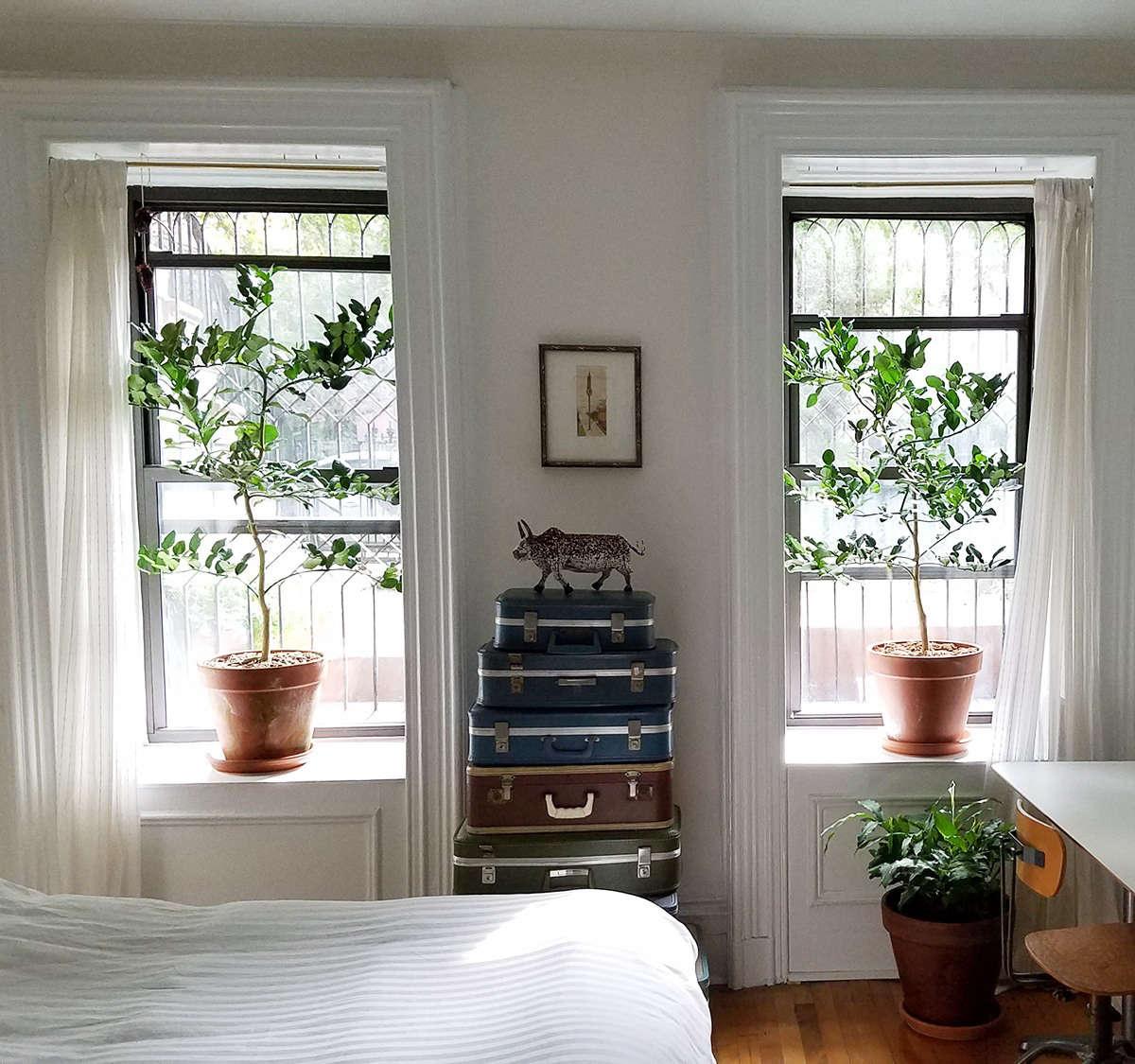 Lime trees indoors by Marie Viljoen