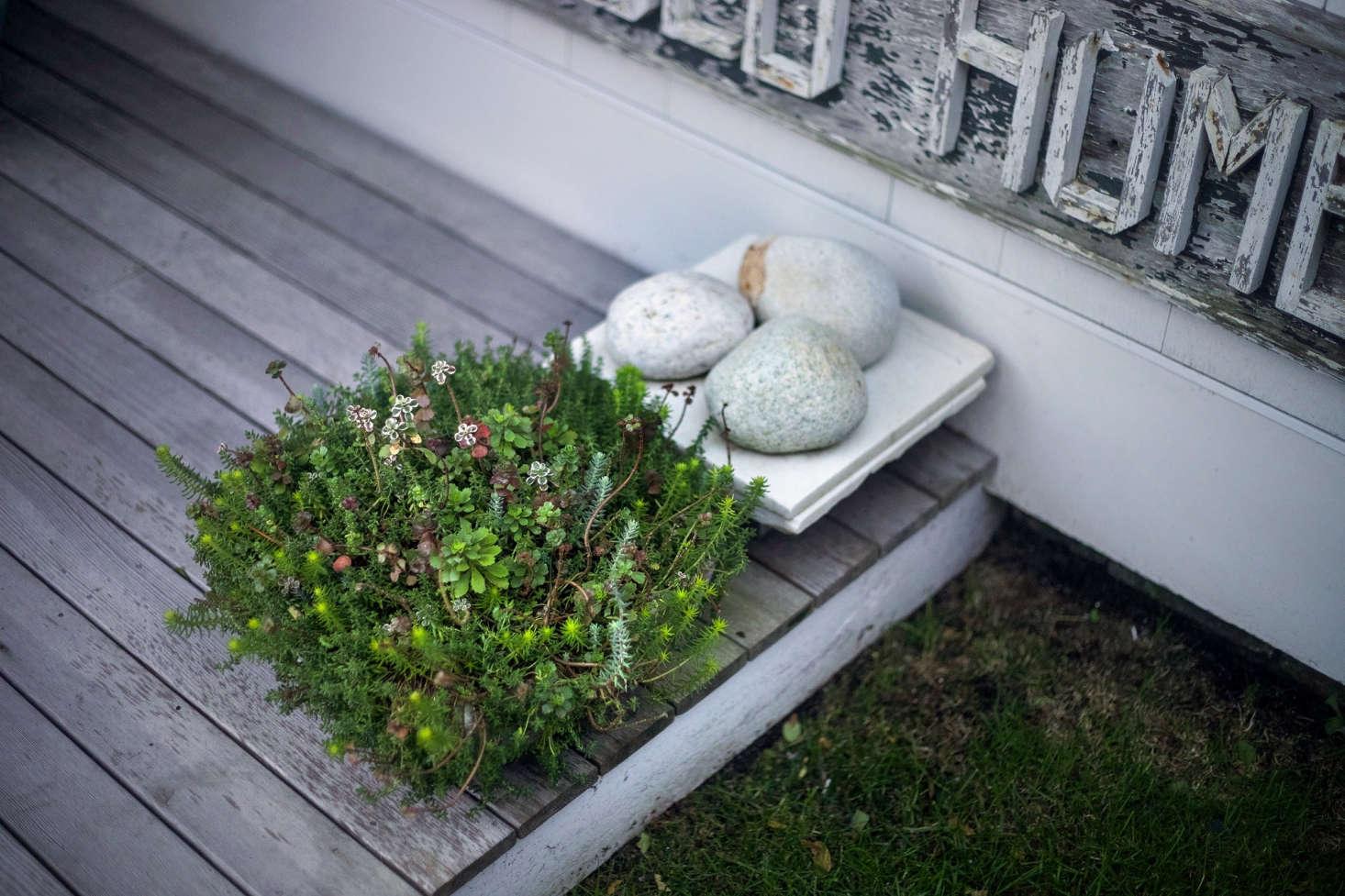 在走廊里的小庭院:——一层的小石头,还有一棵小花园的木树。