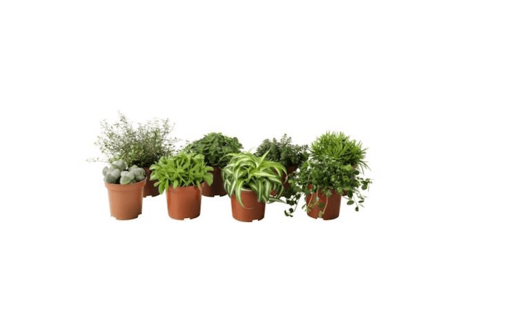 Available from Ikea, aHimalayamix assortment of potted house plants (in 4-inch pots) is $2.99 apiece.