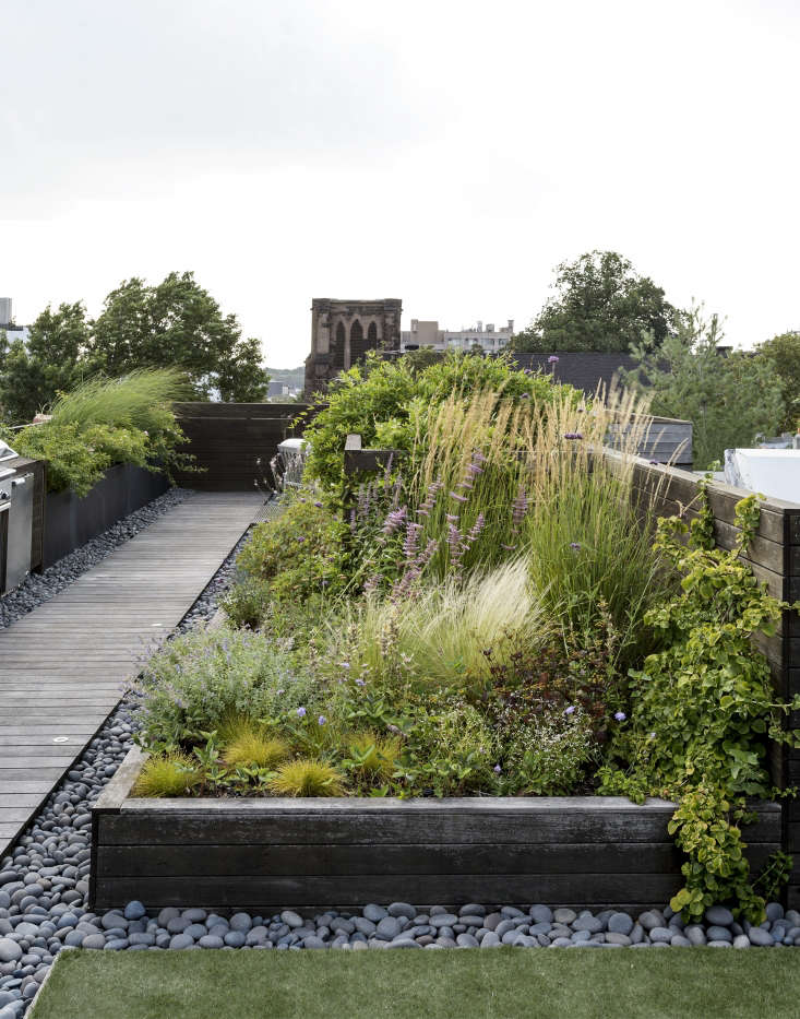 roof garden meadow by Matthew Williams : roof meadow - memphite.com