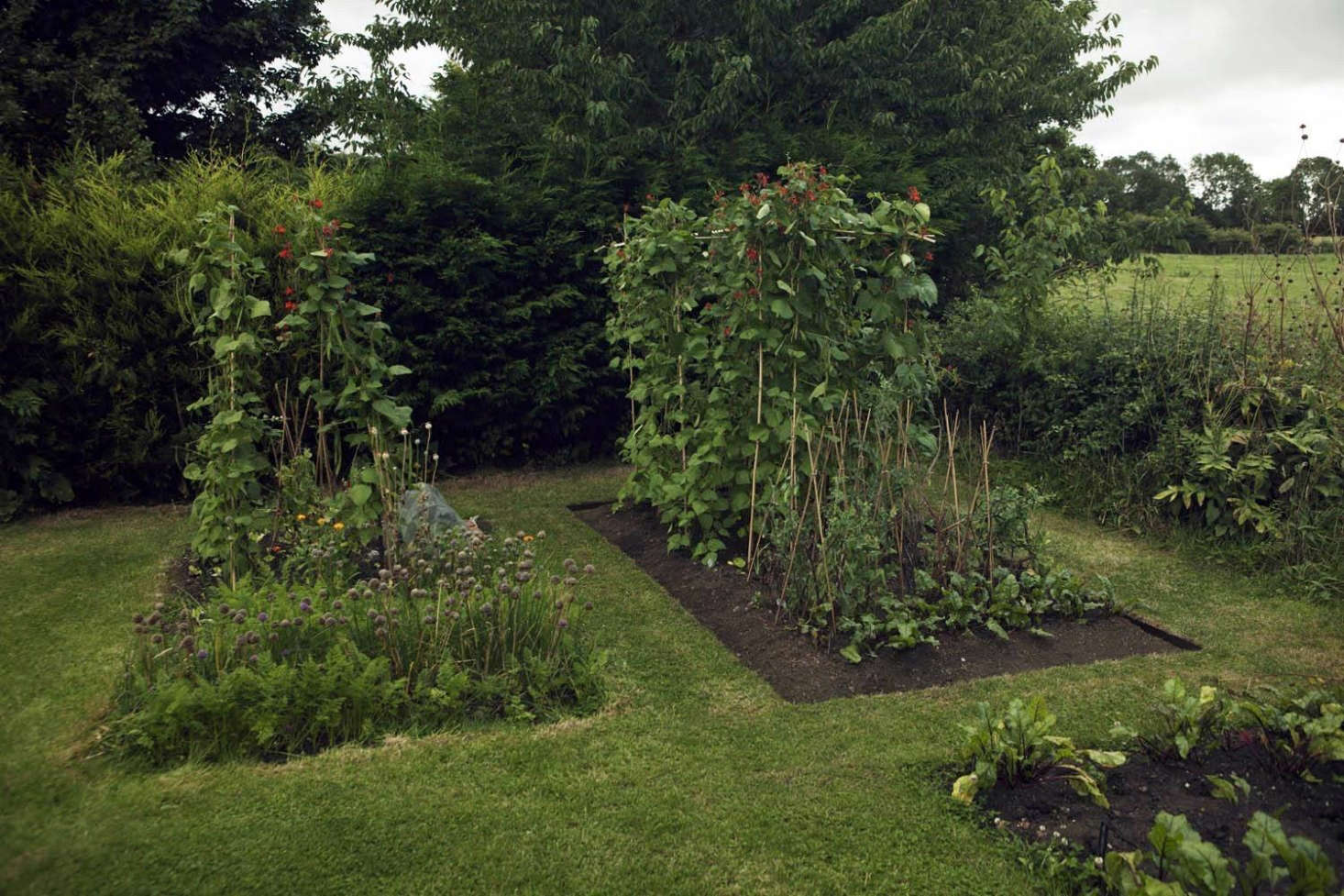 Can This Garden Be Saved My Vegetable Garden Looks Messy