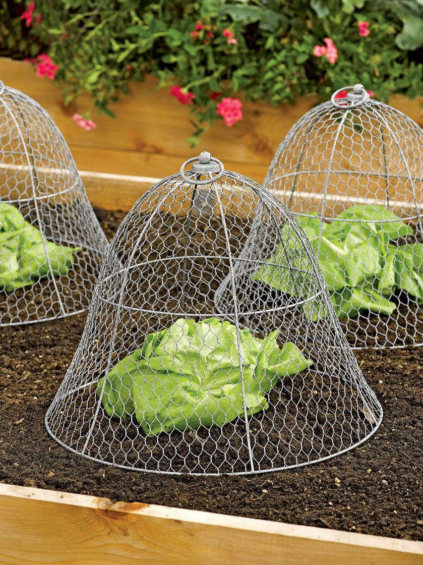 Garden hacks 10 ideas for wire cloches gardenista for Garden cloche designs