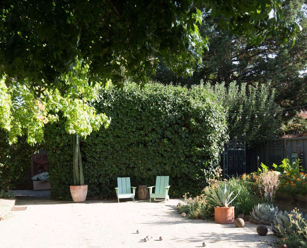 A spectacularly high hedge of mature ivy creates a natural privacy screen on the side of the garden.