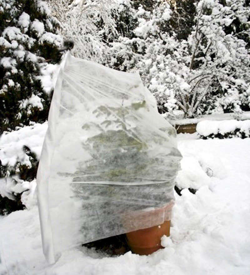 Protect plants from cold temperatures as low as -76 degrees Fahrenheit (-60 degrees Celsius) by wrapping them in a blanket or a roll of fabric. Available in three sizes, Winter Fleece Plant Covers are £6.79 from Crocus.