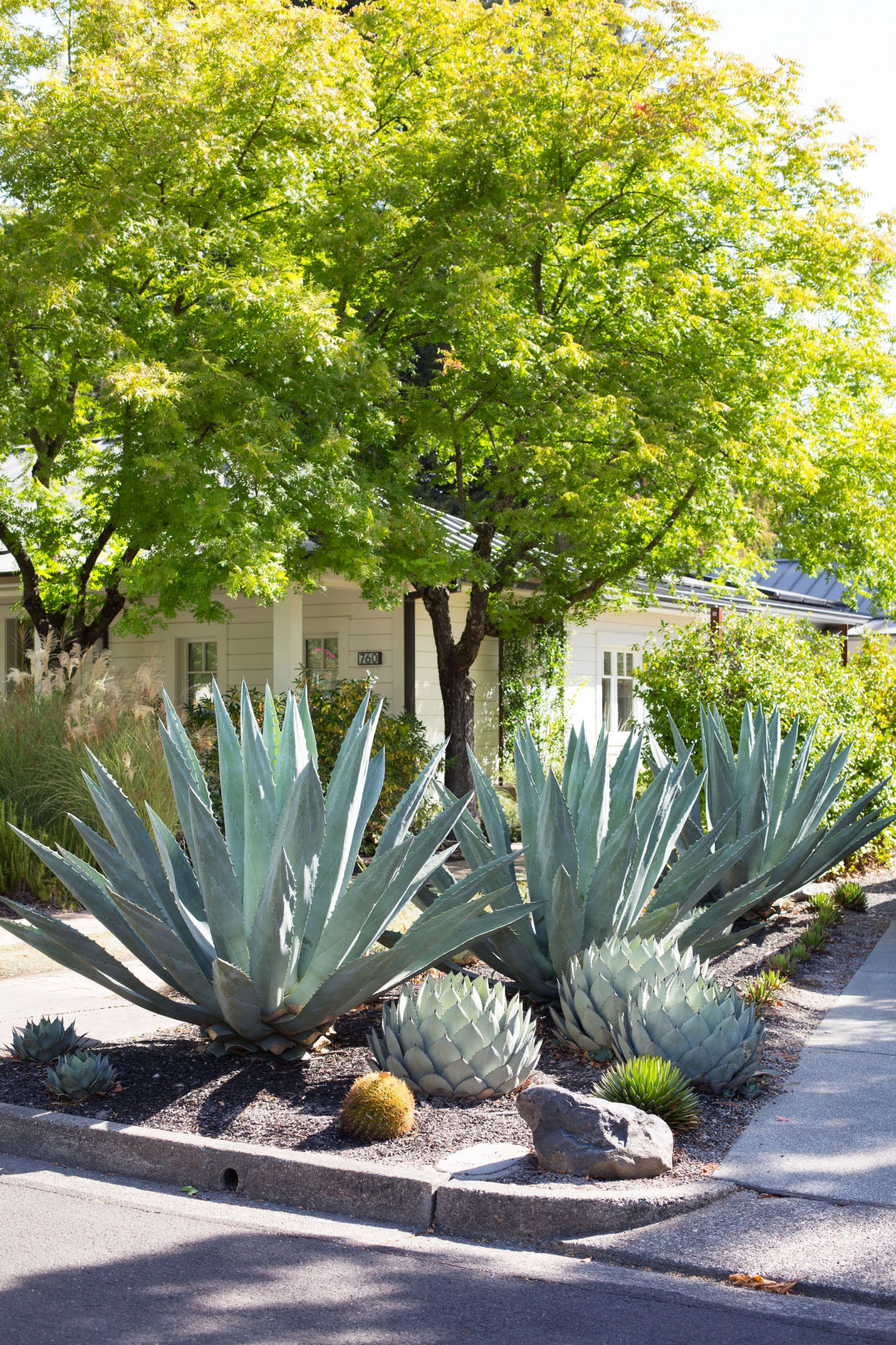 Alongside the driveway, Clay planted a low-water succulents garden to lend structure and texture to the front yard.