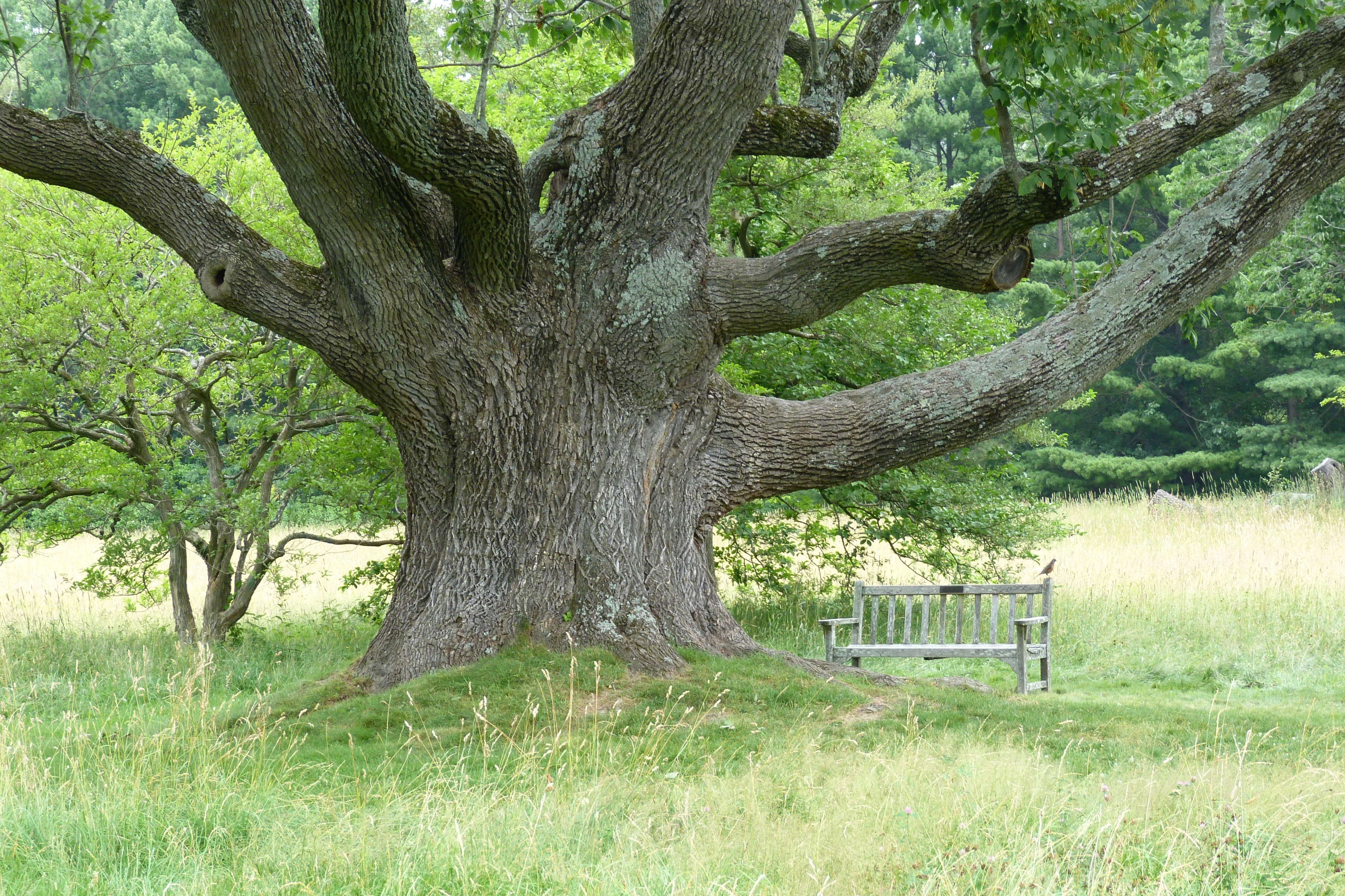 Pinterest Everything Gardening 101 White Ash Tree Gardenista