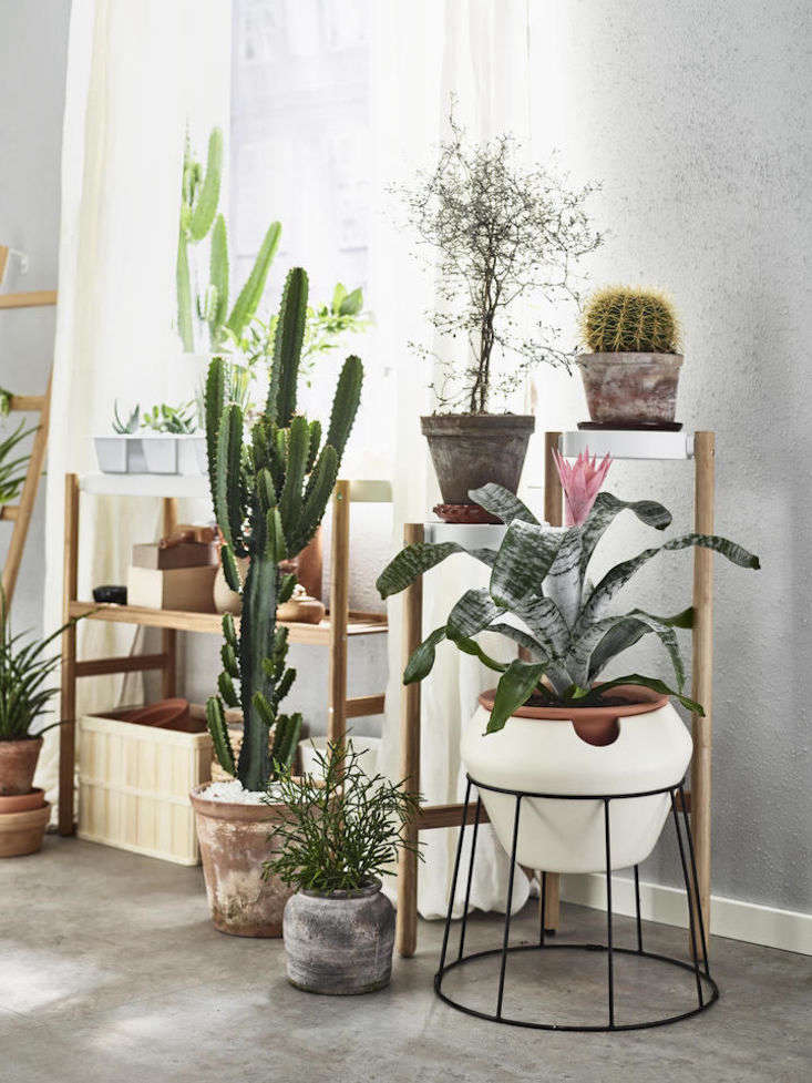 Ikea Sells A Selection Of Self Watering Plant Pots, Including White Trough  Sötcitron (