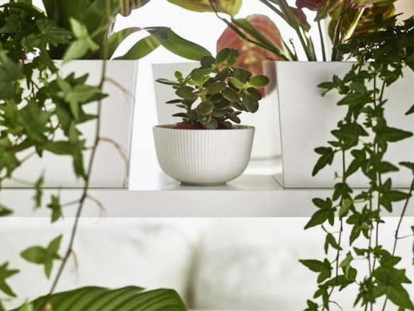 vine house plants an insider u0027s guide to getting first dibs on the best ikea - House Plants Vines