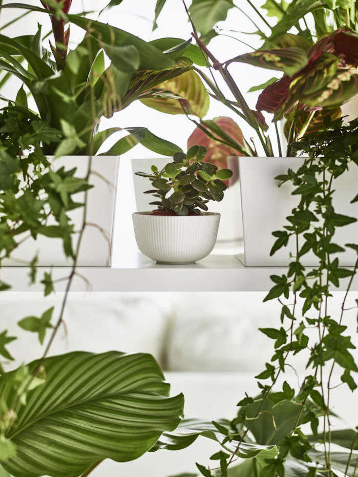 ikea houseplants vines ofantligt bowl