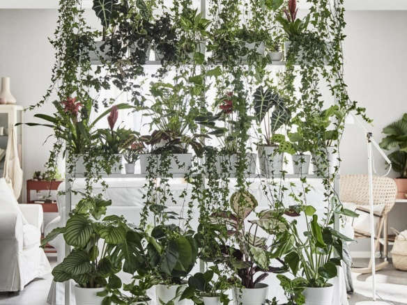 an insiders guide to getting first dibs on the best ikea houseplants