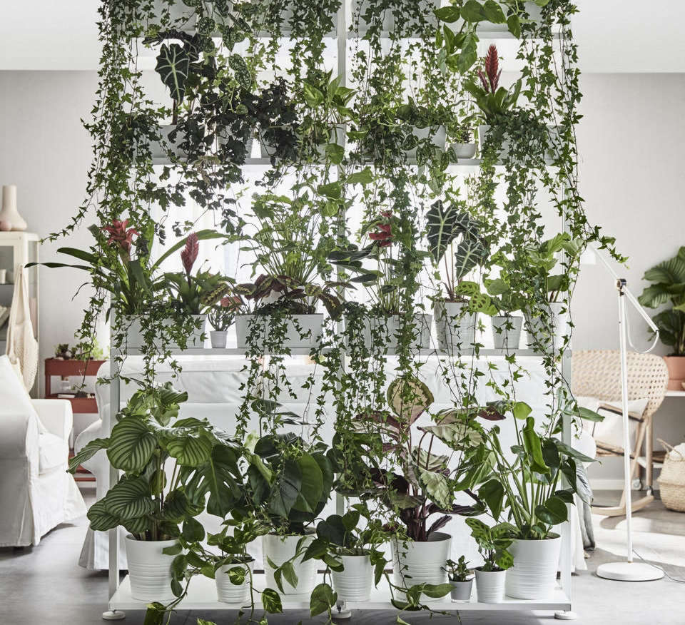 an guide to getting first dibs on the best ikea houseplants