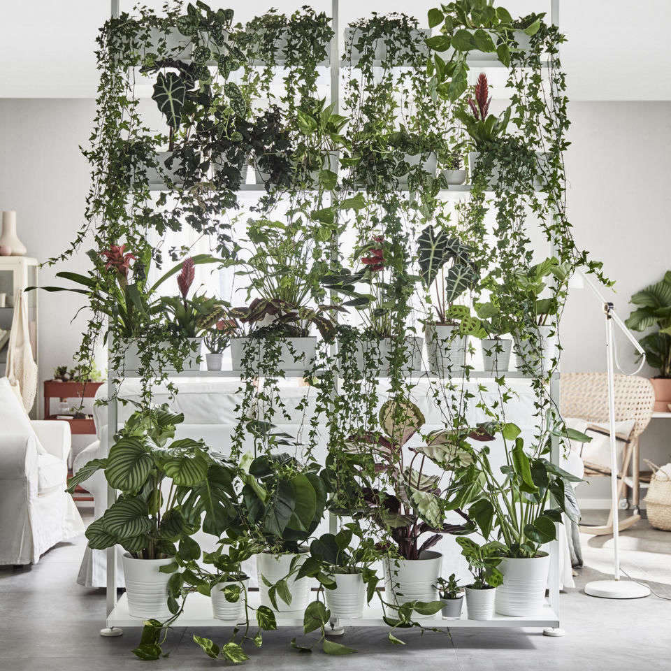 an insiders guide to getting first dibs on the best ikea houseplants gardenista - House Plants Vines