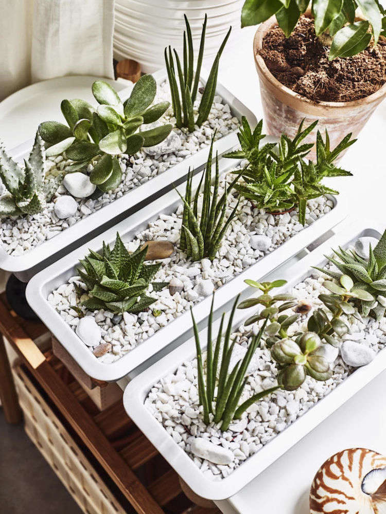 an insider 39 s guide to getting first dibs on the best ikea houseplants gardenista. Black Bedroom Furniture Sets. Home Design Ideas
