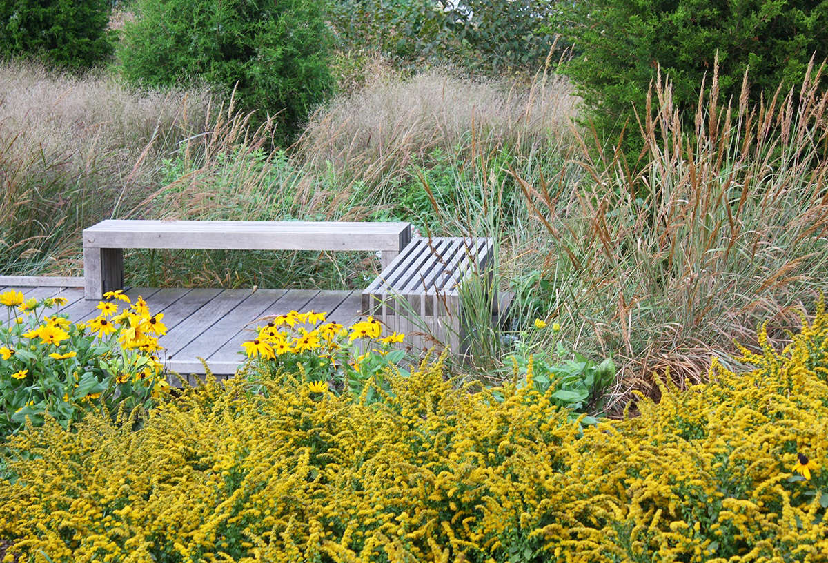 Massed plantings of compact creeping goldenrod (S. sphacelata) are effective paired with loose grasses and a beach-style deck.