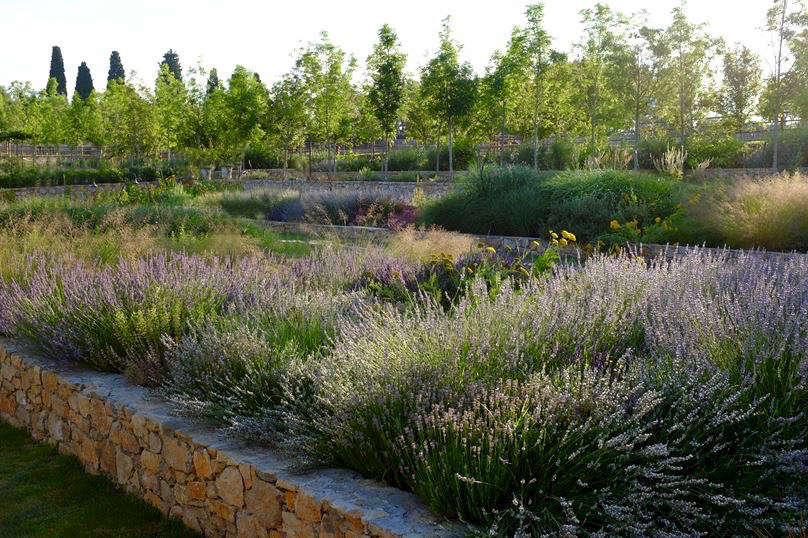 在一个大型的花园里,绿色的花园,包括一个在一起的小厨房里的小葡萄
