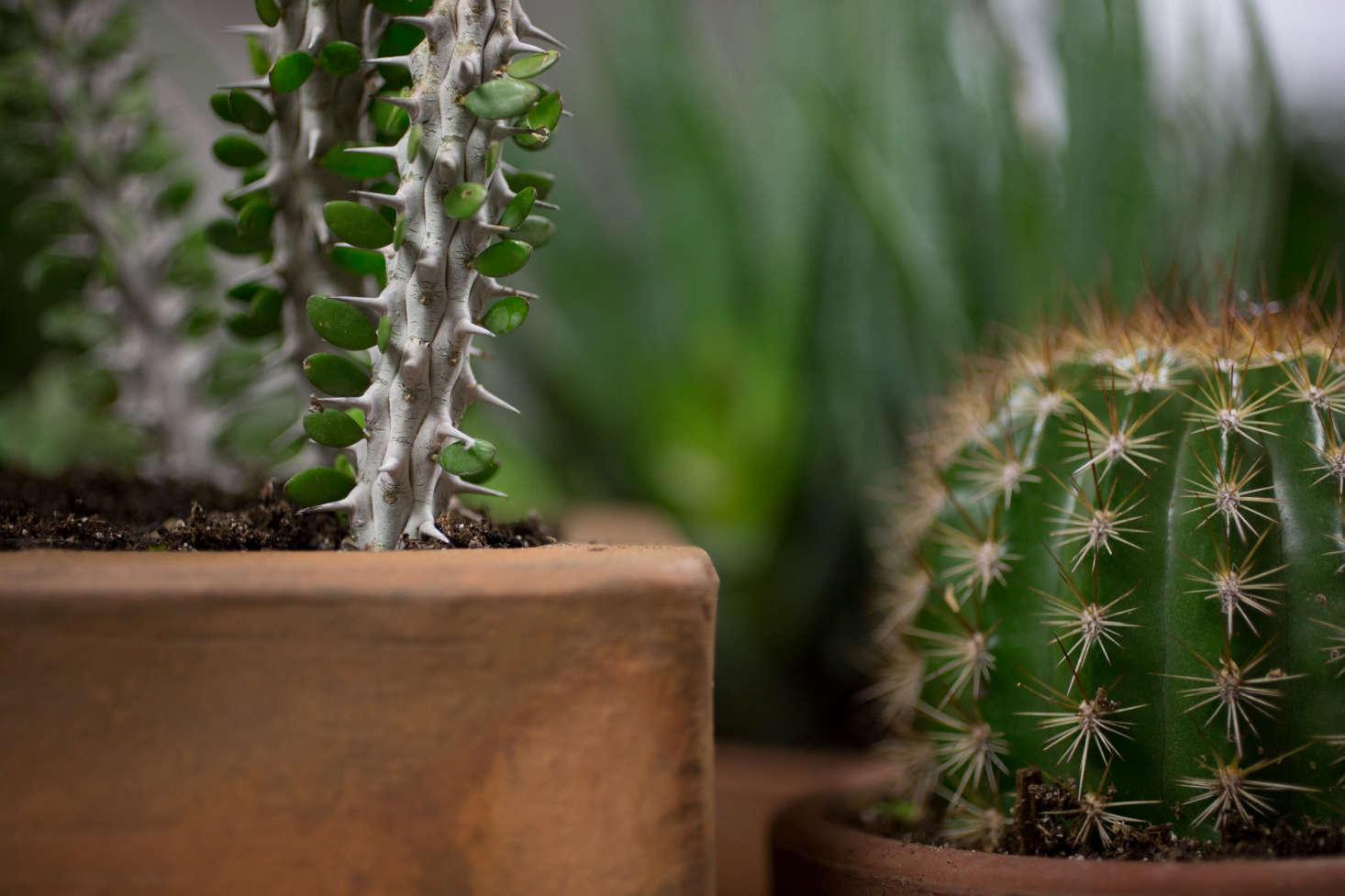 再看看世界里的植物。莫莉·莫莉的故事。