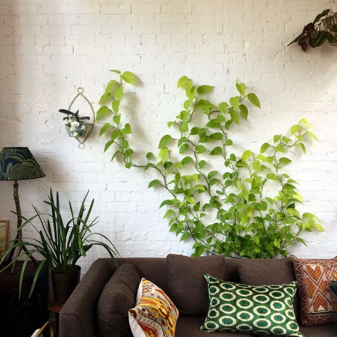 Everything You Need To Know About Houseplant Vines Gardenista