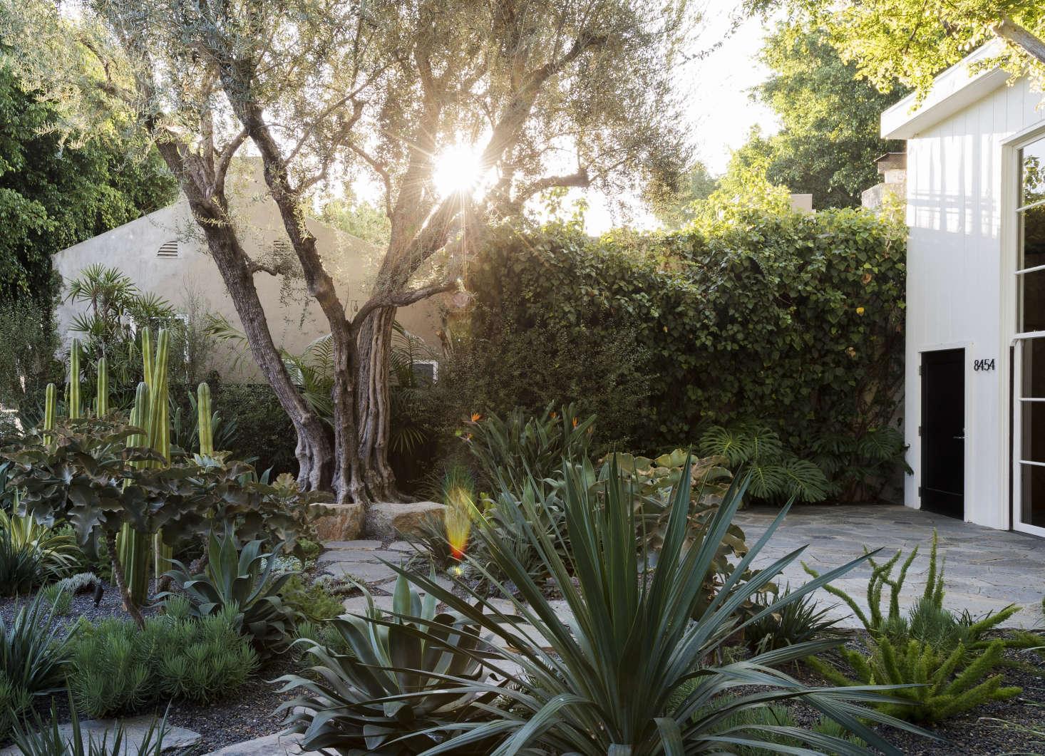 """在圣林娜·麦迪逊的花园里,被一个被称为红玫瑰的传统的杂交女孩。根据玛丽·威廉姆斯的设计,设计的是:""""从ARRRRRRRRRRRRRRA"""",被保护了。"""