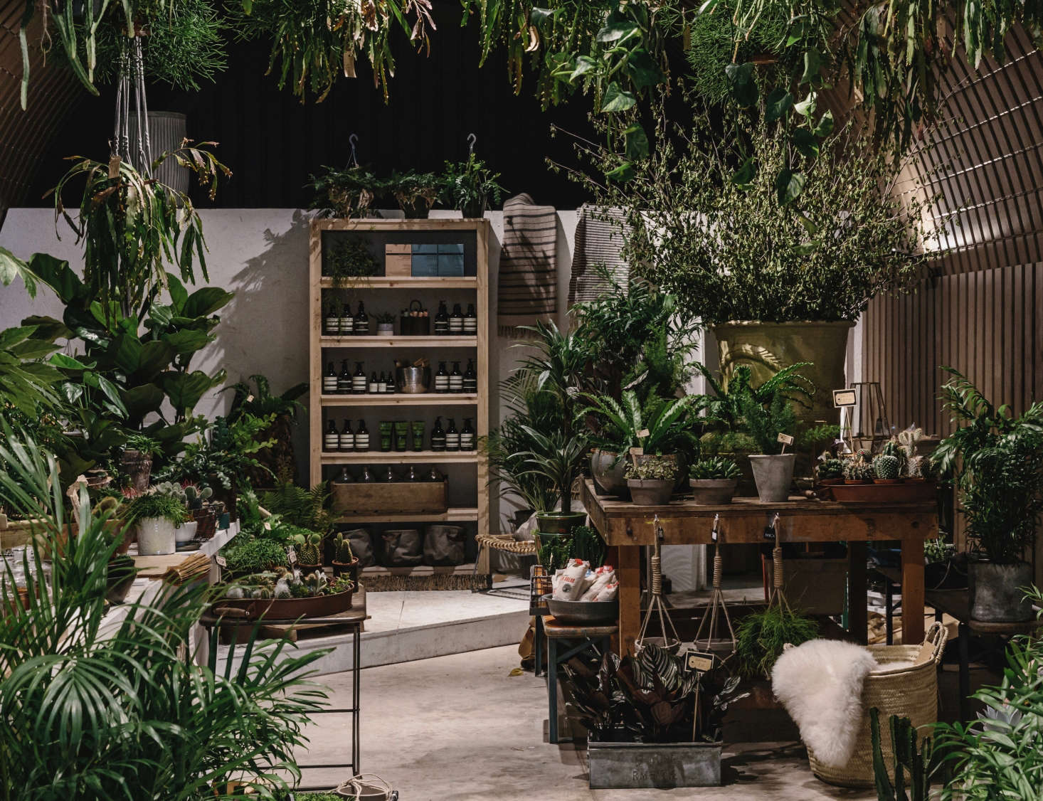shopper u0027s diary houseplants at forest in london gardenista