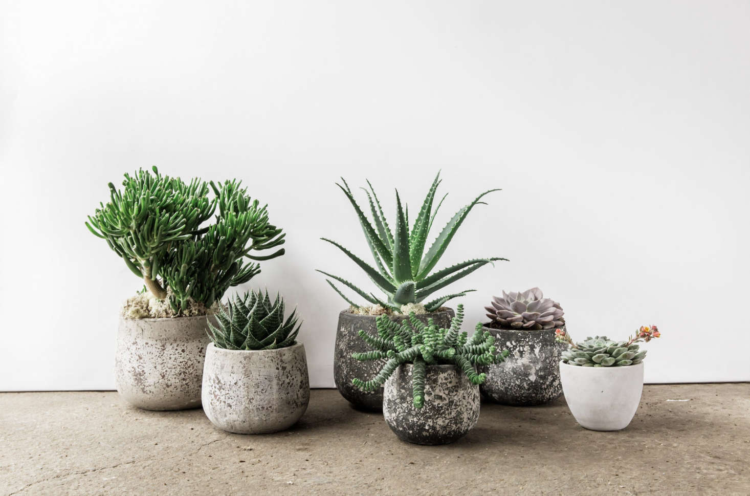 Fran tries to source ceramics from local makers. There are hand-polished concrete pots fromConpot (from £, depending on size) and beautiful small ceramic pots and bowls from Charlotte Grinling and Gareth Thomas.