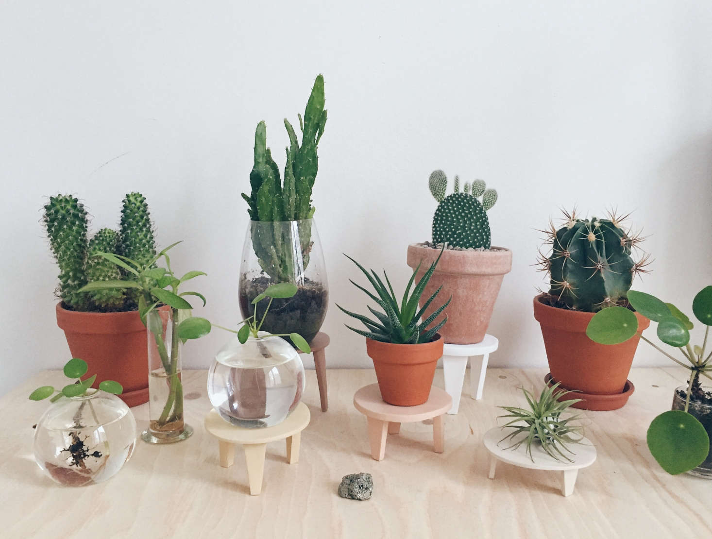 """To vary the heights of her potted plants, Maria fashioned """"cactus coasters."""""""