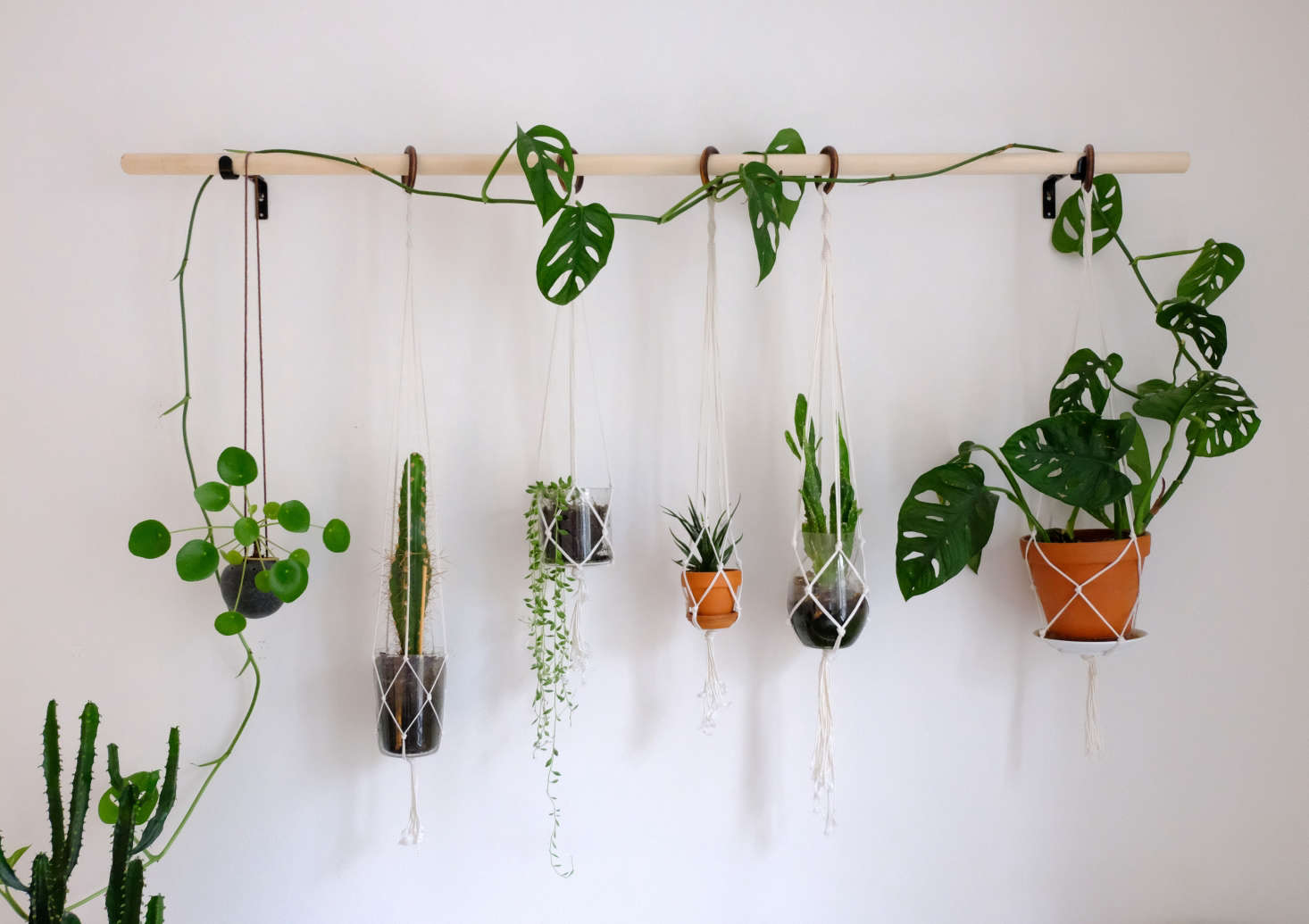 """The broomstick is about 1.5 meters (16 feet) long. It currently displays, from left to right: """"pilea, a cactus (don't know the name), string of tears, Haworthia, Opuntia, and a monstera—a monkey mask, also known as the Swiss cheese plant."""""""