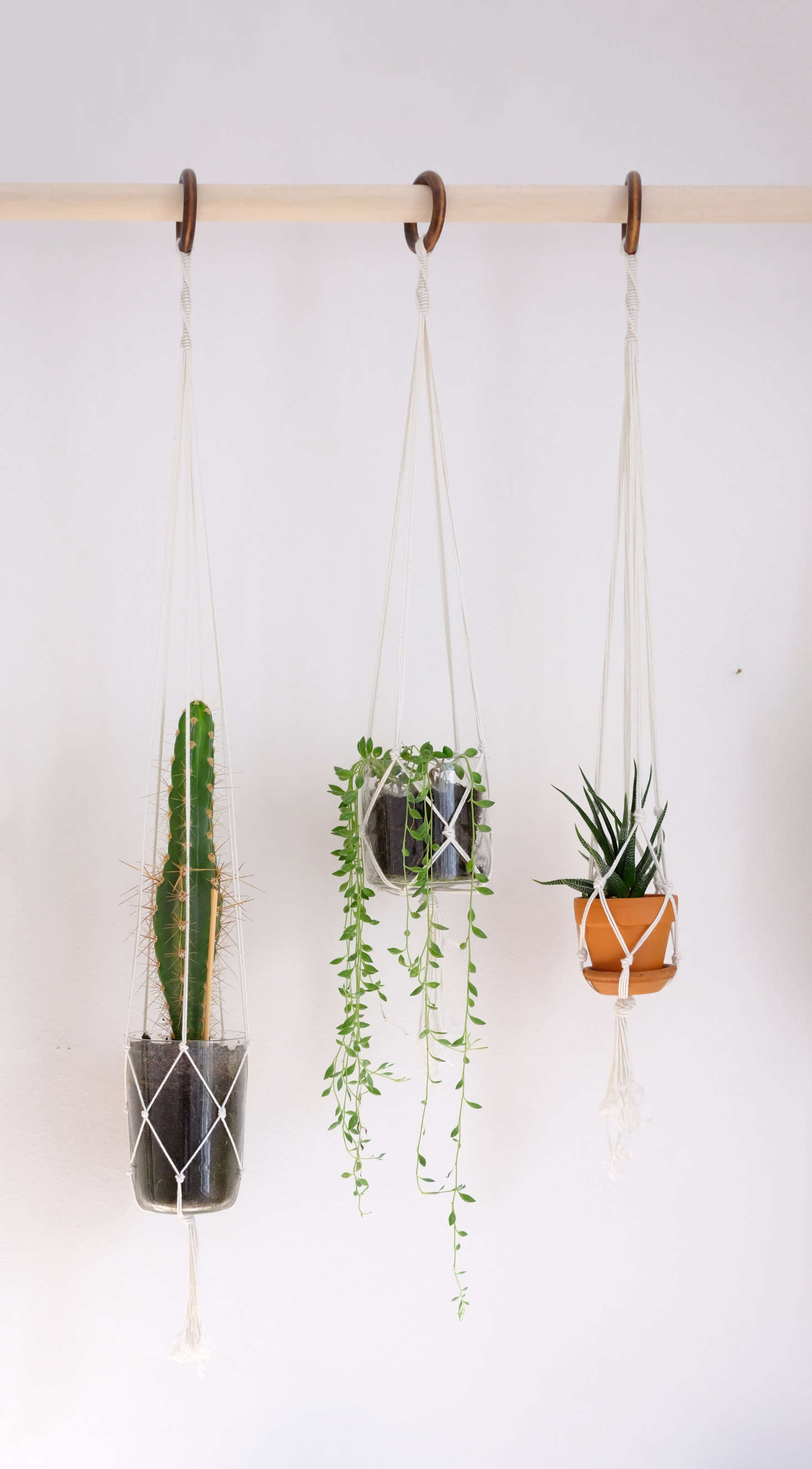 Diy hanging plant wall with macrame planters for Diy wall plant holder