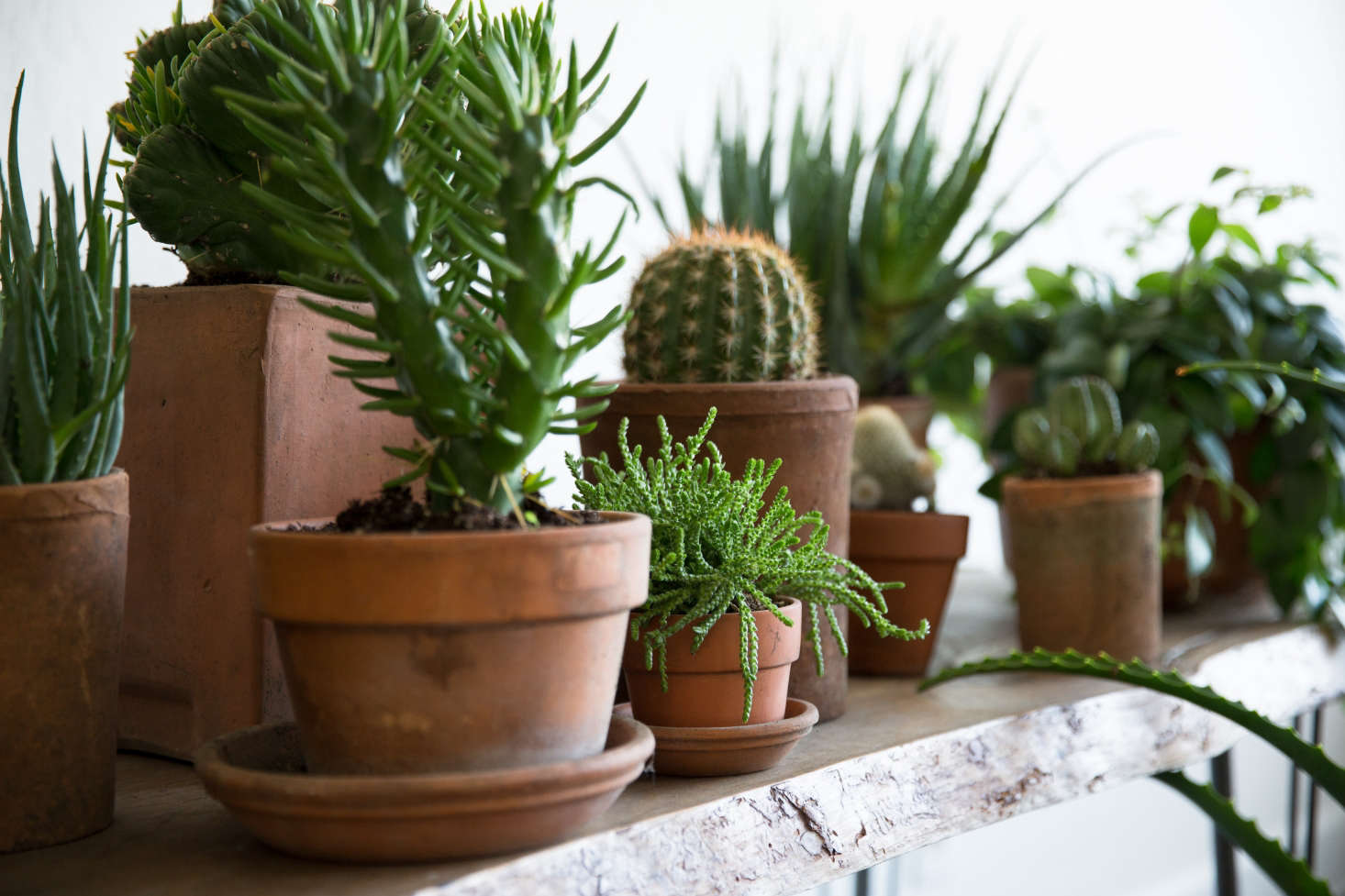 Photograph by Molly Decoudreaux via The Plant Library.