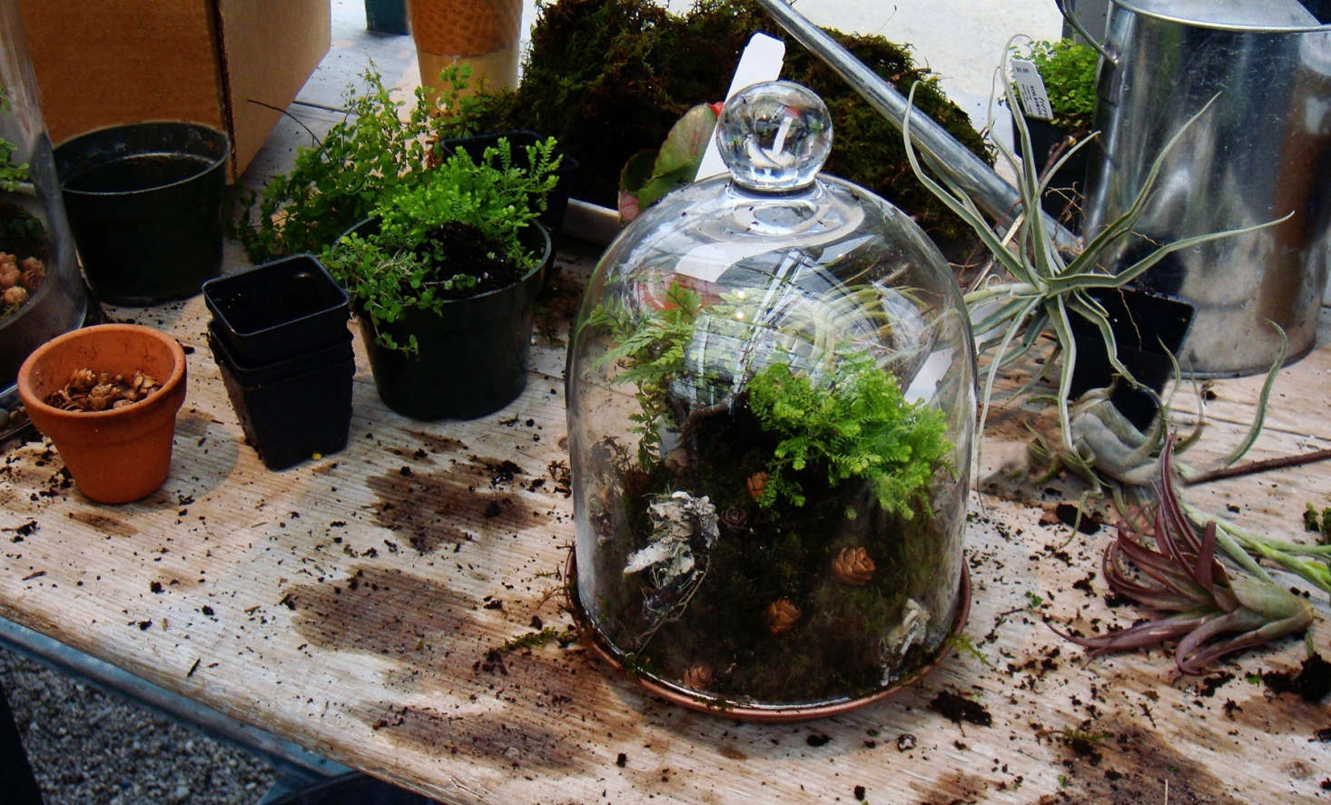 When Terrariums Go Bad 6 Tips For Troubleshooting Mold Yecch