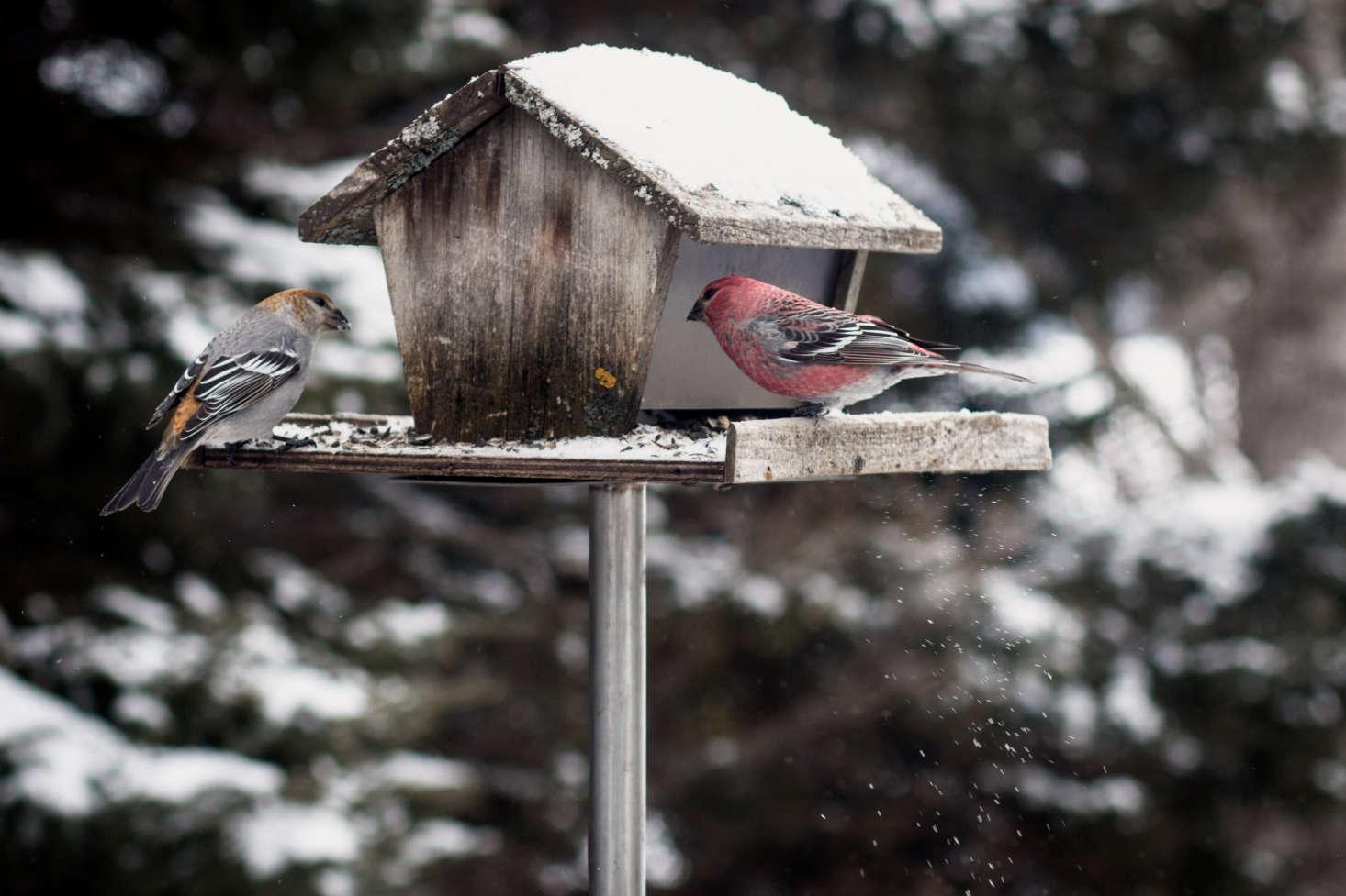 在鸟的鸟上有一只鸟。来自沙伦·卡莫斯的照片。