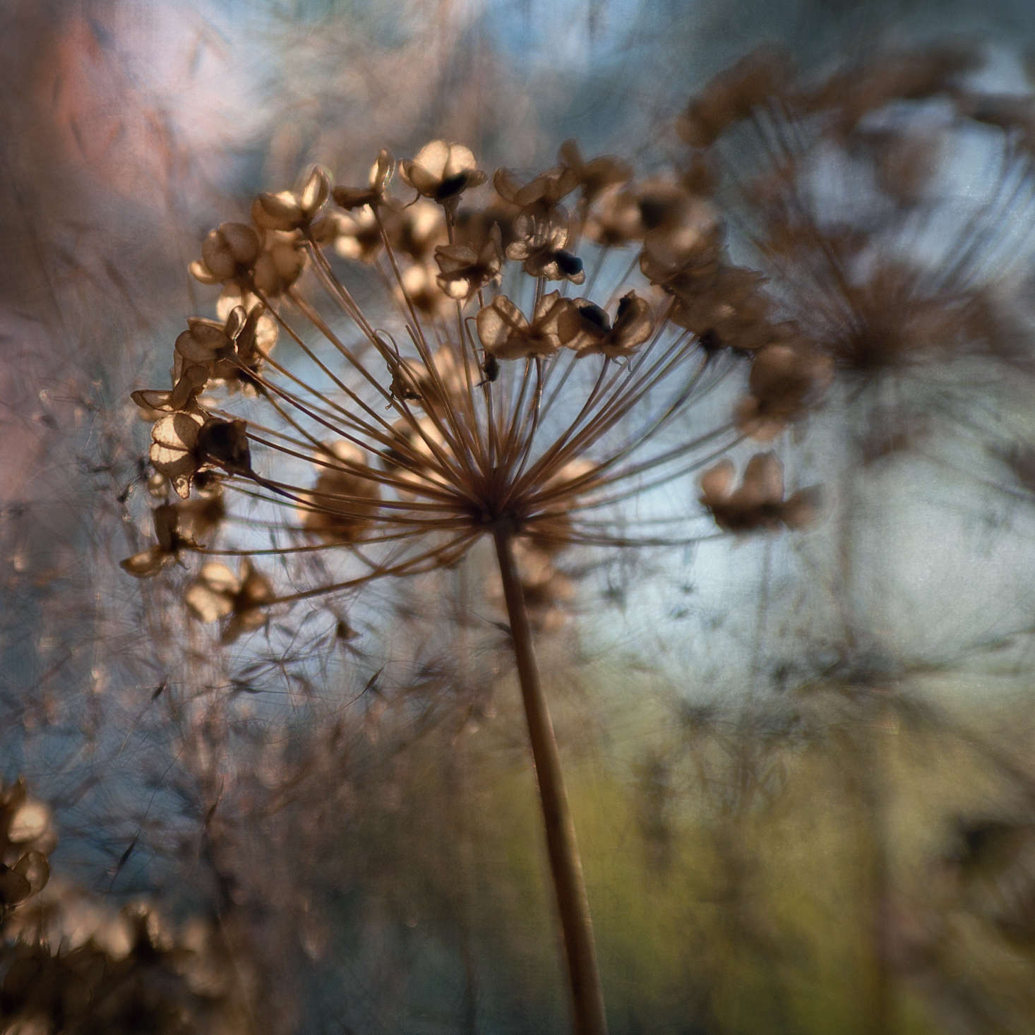12月十二月。来自贾尼斯·贾纳的照片。