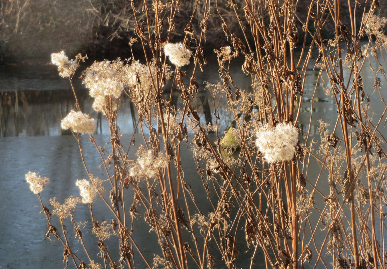 The Beauty Of Decay 10 Perennials To Add Structure To A Winter