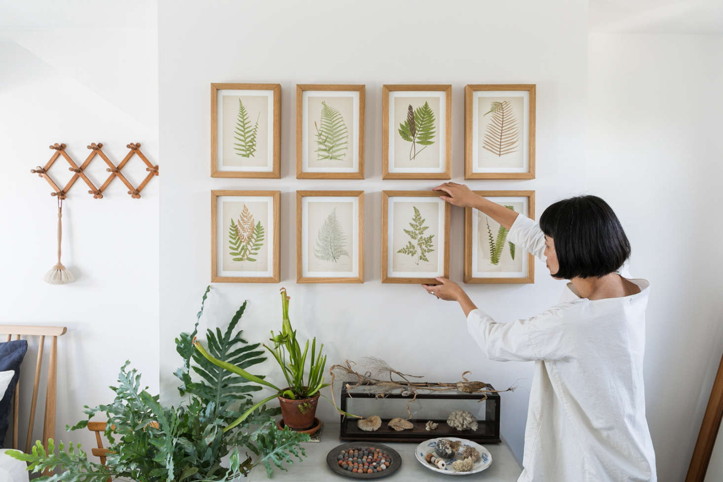 The power of symmetry fern leaves in simple wooden frames impose order on a botanical