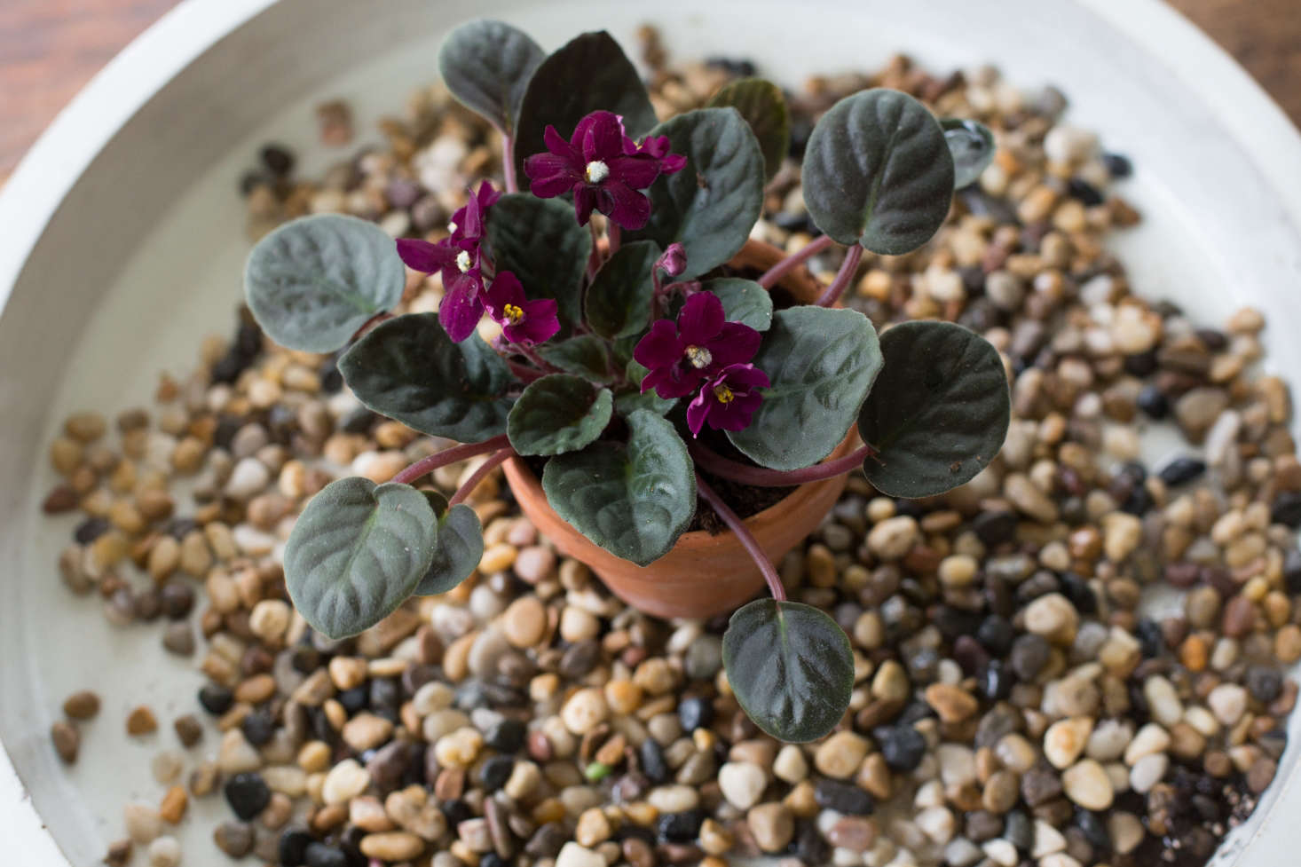 Plant Doctor How To Save A Dying Houseplant Gardenista