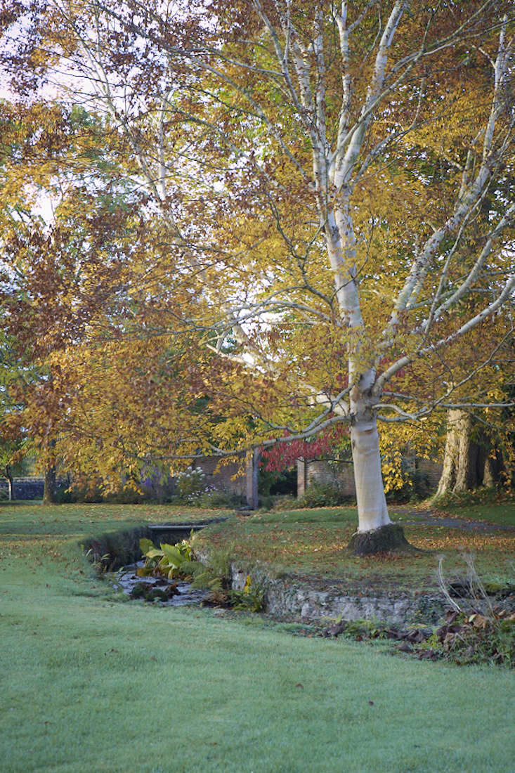 Birch Trees: 5 Favorites To Plant In A Landscape