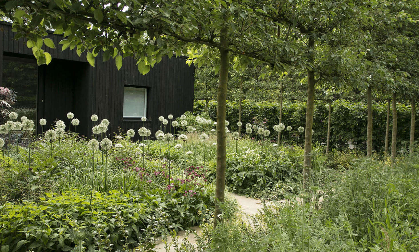 A snowy, exuberant meadow of alliums blooms in a Gatehouse Garden: A Dramatic Black Backdrop for a White Wildflower Meadow.Photograph byRosangela Photography, courtesy ofStefano Marinaz Landscape Architecture.
