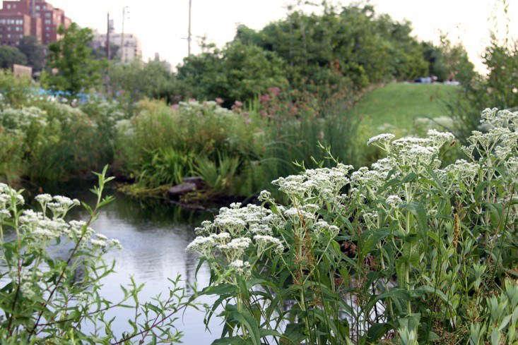 布鲁克林公园……——布鲁克林公园的雪布。艾琳·特纳。