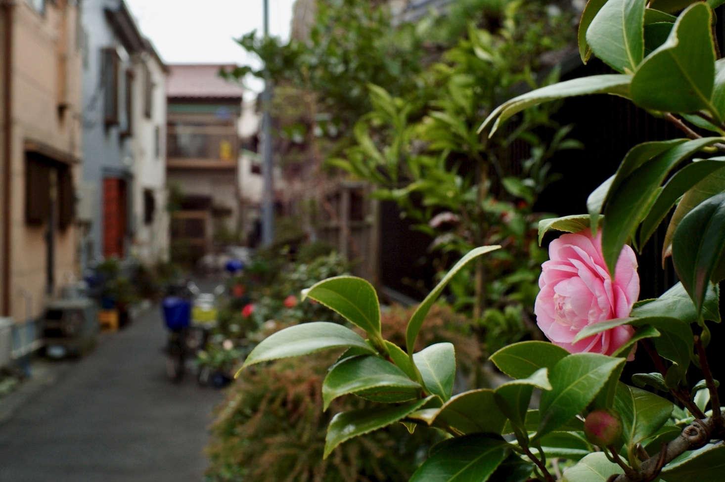 一片棕色的春天,在东京的花朵里。来自海斯湾的照片。