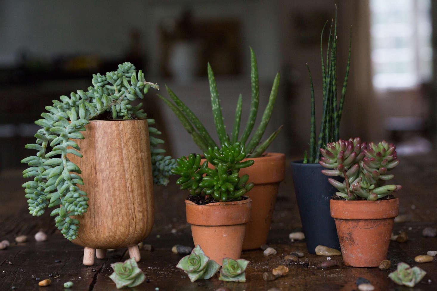 succulents 8 tips to help your favorite indoor plants survive winter gardenista. Black Bedroom Furniture Sets. Home Design Ideas