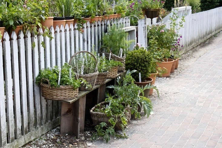 Everything You Need To Know About Herb Gardens Gardenista