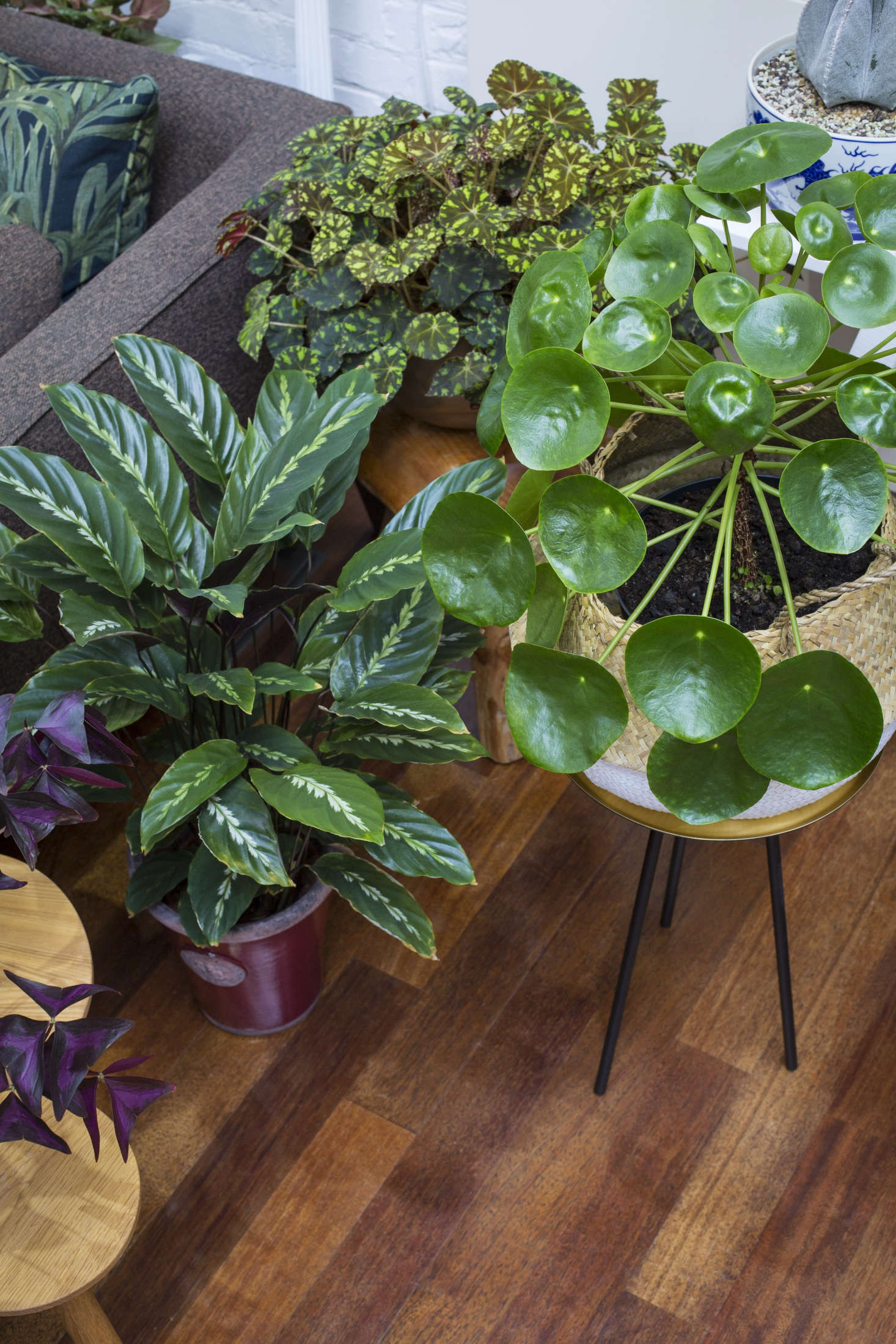House Plants: Jamie's Jungle: At Home With Houseplants In London