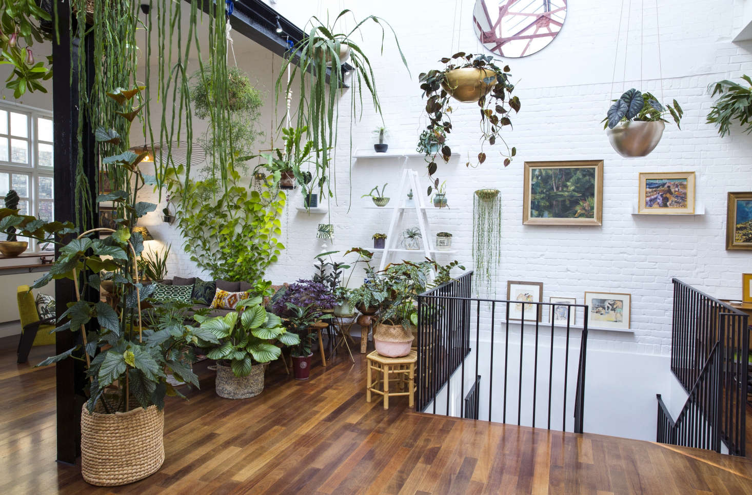 Large Indoor House Trees: Jamie's Jungle: At Home With Houseplants In London