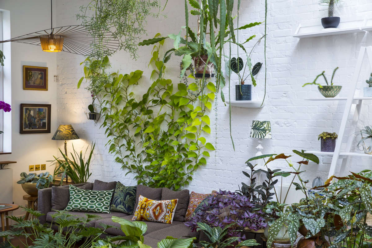 Everything You Need To Know About Houseplant Vines