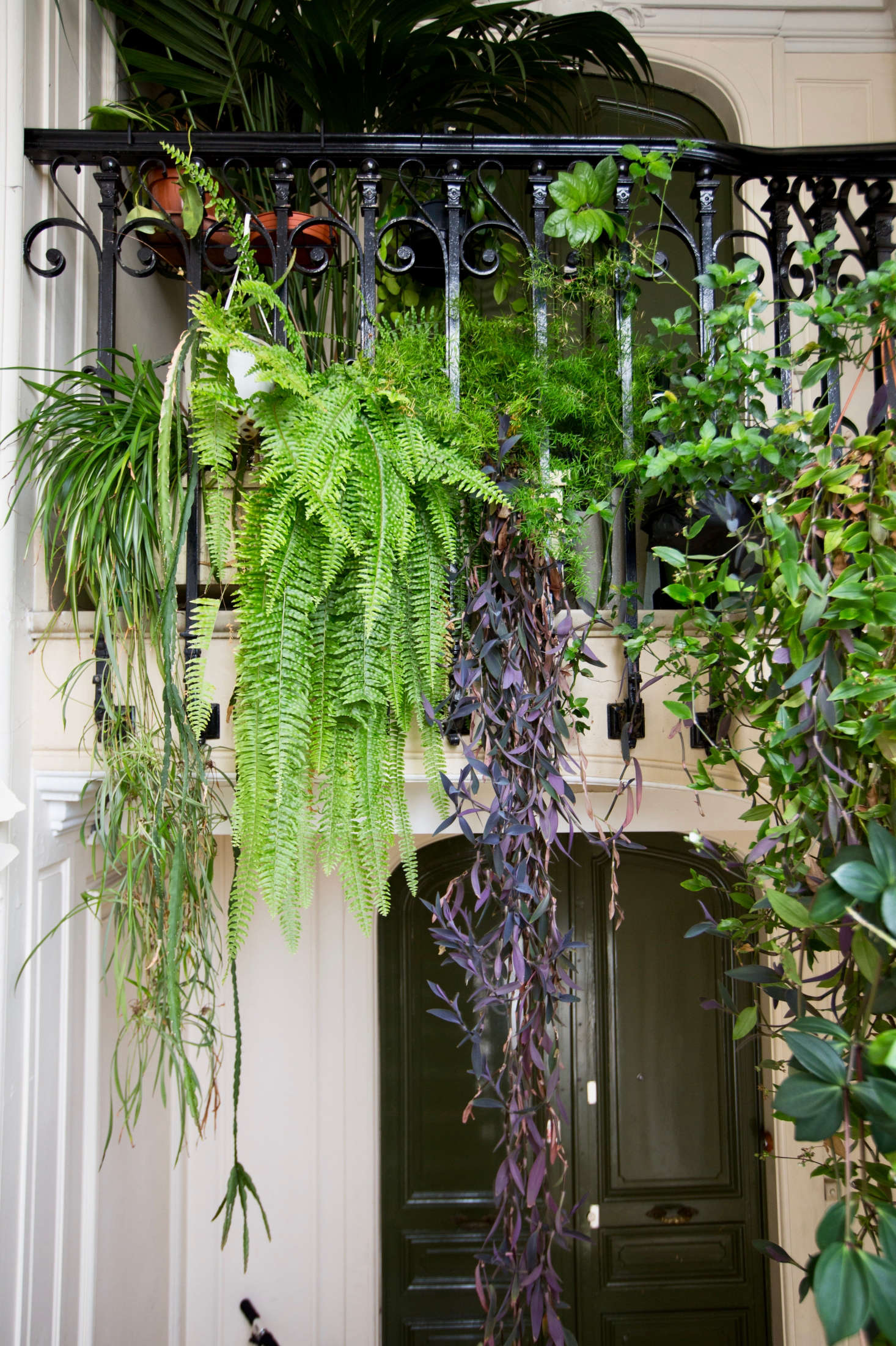 8 Houseplant Ideas To Steal From A Grand Parisian Escalier