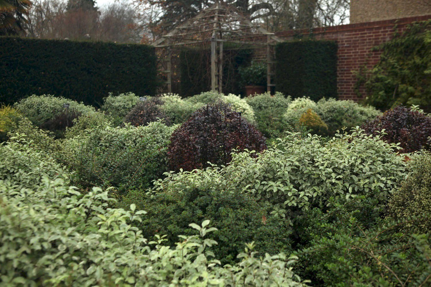 Landscape Ideas Boxed In By Boxwood 5 Shrubs To Try Instead