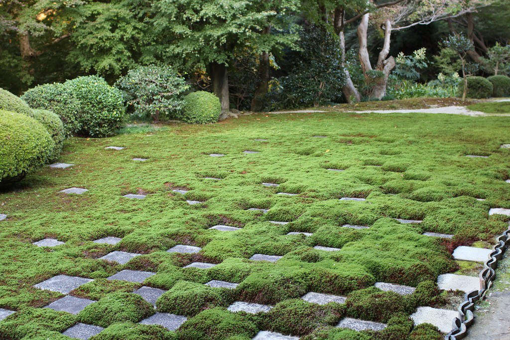 Announcing Our New Guide To Ground Covers Gardenista
